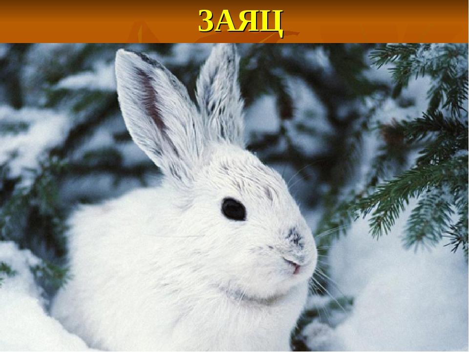ЗАЯЦ Маленький, беленький, По лесу прыг, прыг, По снегу тык, тык.