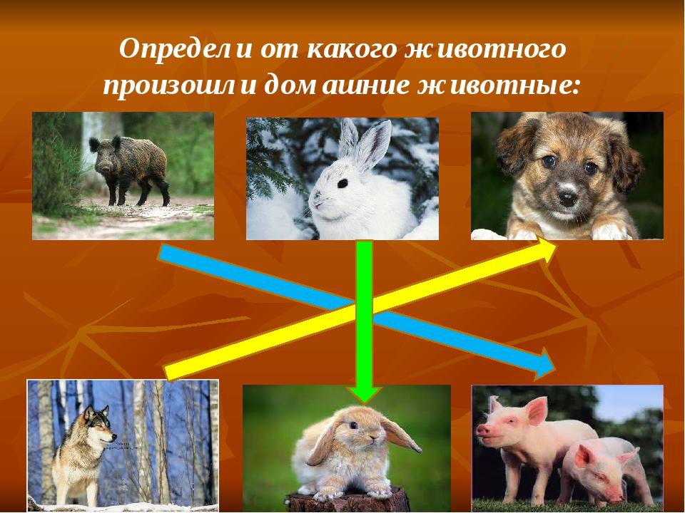 Определи от какого животного произошли домашние животные: