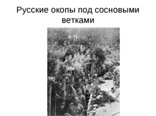 Русские окопы под сосновыми ветками