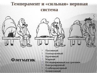 Темперамент и «сильная» нервная система Флегматик Пассивный Благоразумный Вду