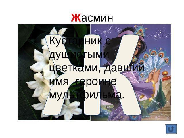 Жасмин Кустарник с душистыми цветками, давший имя героине мультфильма.