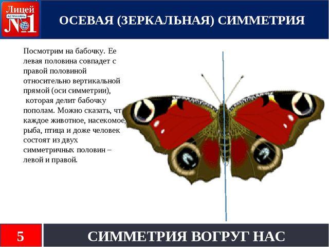 Посмотрим на бабочку. Ее левая половина совпадет с правой половиной относите...