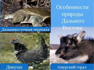 Особенности природы Дальнего Востока Амурский горал Дикуша Дальневосточная че