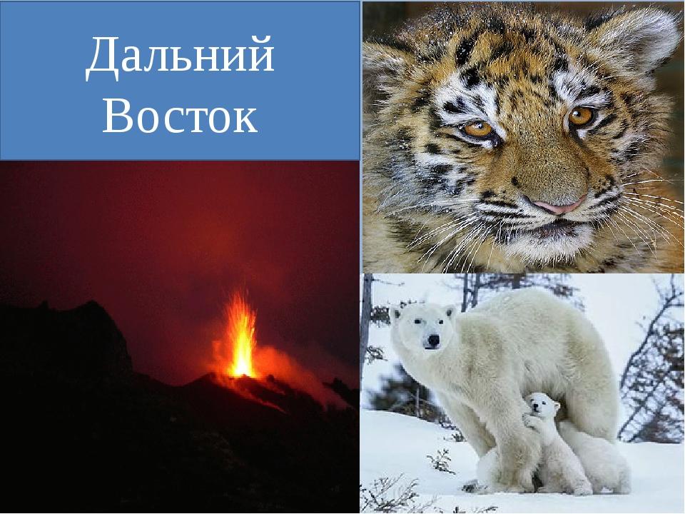 Где мы сможем увидеть этих животных и особенности природы? Дальний Восток