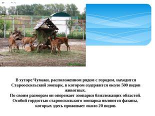 В хуторе Чумаки, расположенном рядом с городом, находится Старооскольский зоо