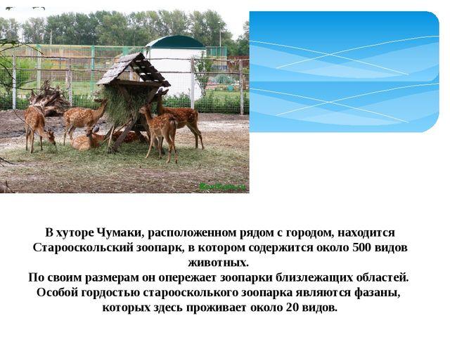 В хуторе Чумаки, расположенном рядом с городом, находится Старооскольский зоо...