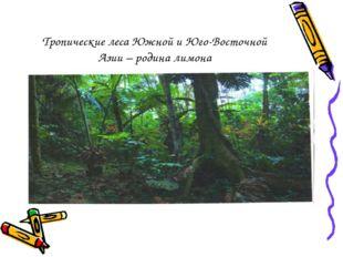 Тропические леса Южной и Юго-Восточной Азии – родина лимона