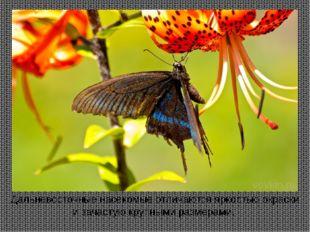 Дальневосточные насекомые отличаются яркостью окраски и зачастую крупными раз