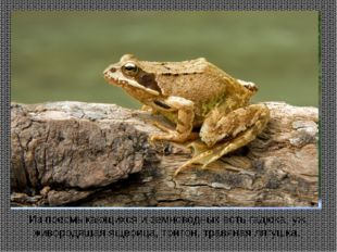Из пресмыкающихся и земноводных есть гадюка, уж, живородящая ящерица, тритон,