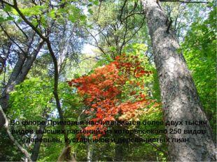 Во флоре Приморья насчитывается более двух тысяч видов высших растений, из ко