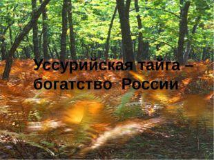 Уссурийская тайга – богатство России