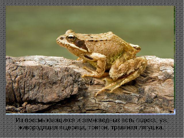 Из пресмыкающихся и земноводных есть гадюка, уж, живородящая ящерица, тритон,...