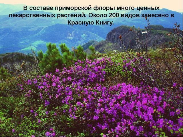 В составе приморской флоры много ценных лекарственных растений. Около 200 вид...