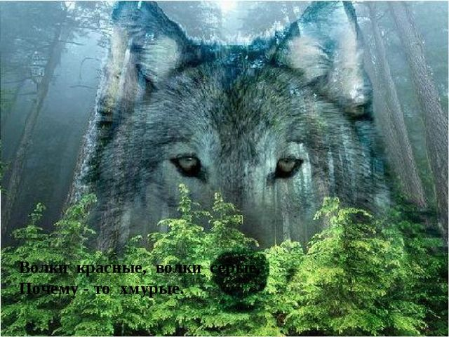 Волки красные, волки серые, Почему - то хмурые.