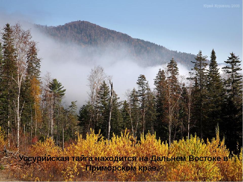 Уссурийская тайга находится на Дальнем Востоке в Приморском крае.