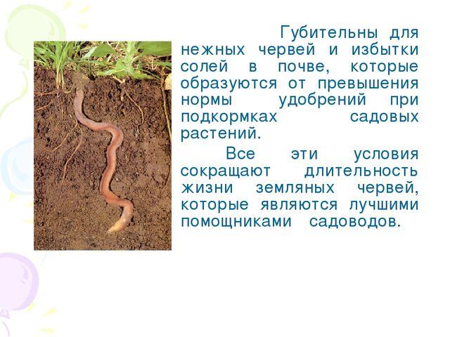 Губительны для нежных червей и избытки солей в почве, которые образуются от...