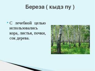 С лечебной целью использовались кора, листья, почки, сок дерева. Береза ( кы