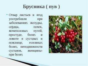 Отвар листьев и ягод употребляли при заболеваниях желудка, сердца, почек, мо