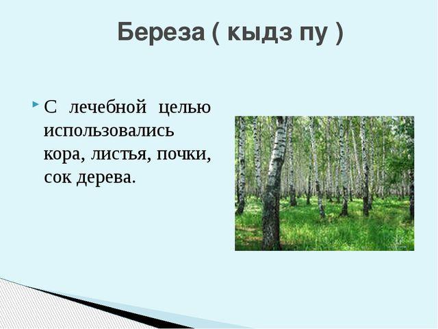 С лечебной целью использовались кора, листья, почки, сок дерева. Береза ( кы...