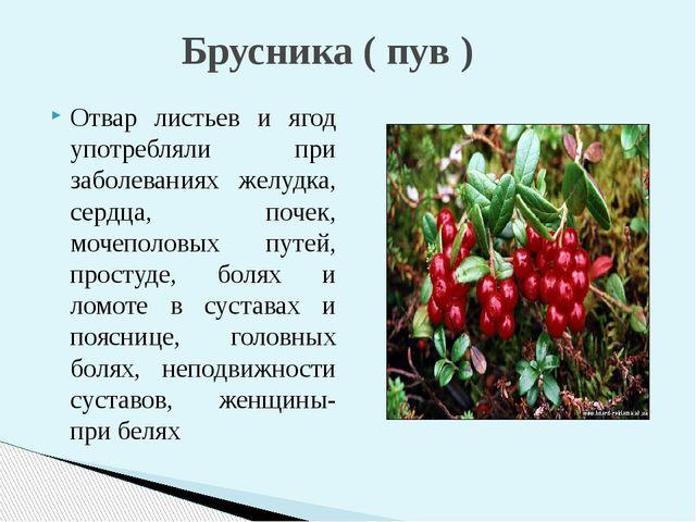 Отвар листьев и ягод употребляли при заболеваниях желудка, сердца, почек, мо...