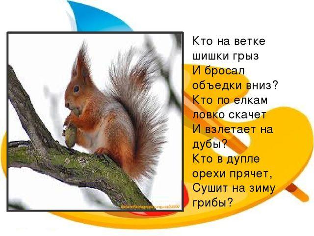 Кто на ветке шишки грыз И бросал объедки вниз? Кто по елкам ловко скачет И вз...