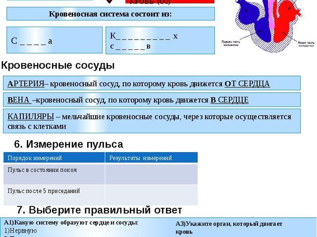 А1)Какую систему образуют сердце и сосуды: 1)Нервную 2)Пищеварительную 3)Дыха...