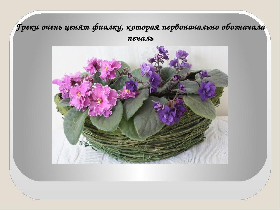 Греки очень ценят фиалку, которая первоначально обозначала печаль