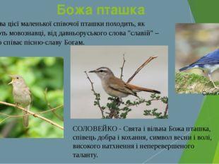 Божа пташка Назва цієї маленької співочої пташки походить, як вважають мовозн