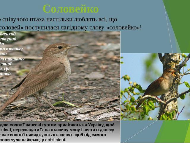 Соловейко Цього співучого птаха настільки люблять всі, що назва «соловей» пос...