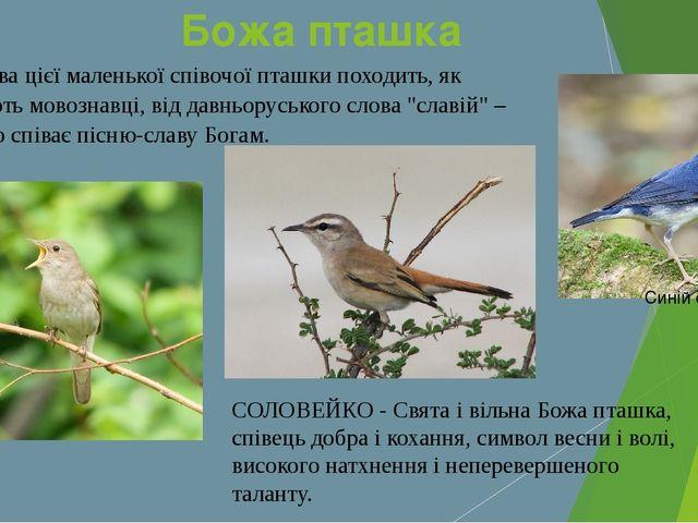 Божа пташка Назва цієї маленької співочої пташки походить, як вважають мовозн...