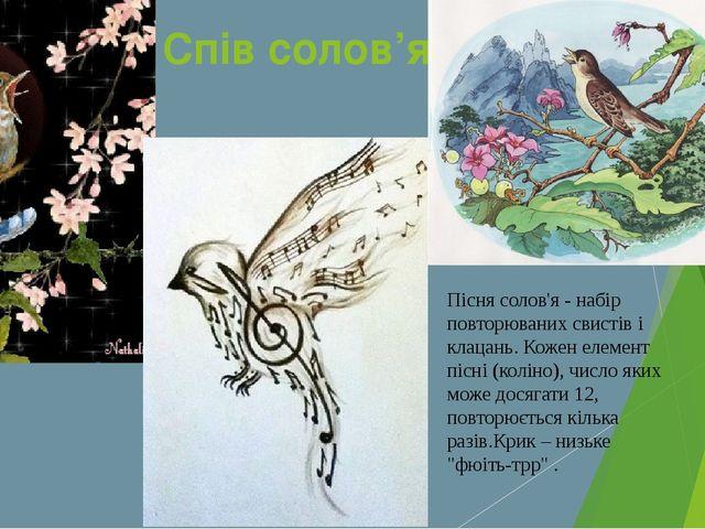 Спів солов'я Пісня солов'я - набір повторюваних свистів і клацань. Кожен елем...