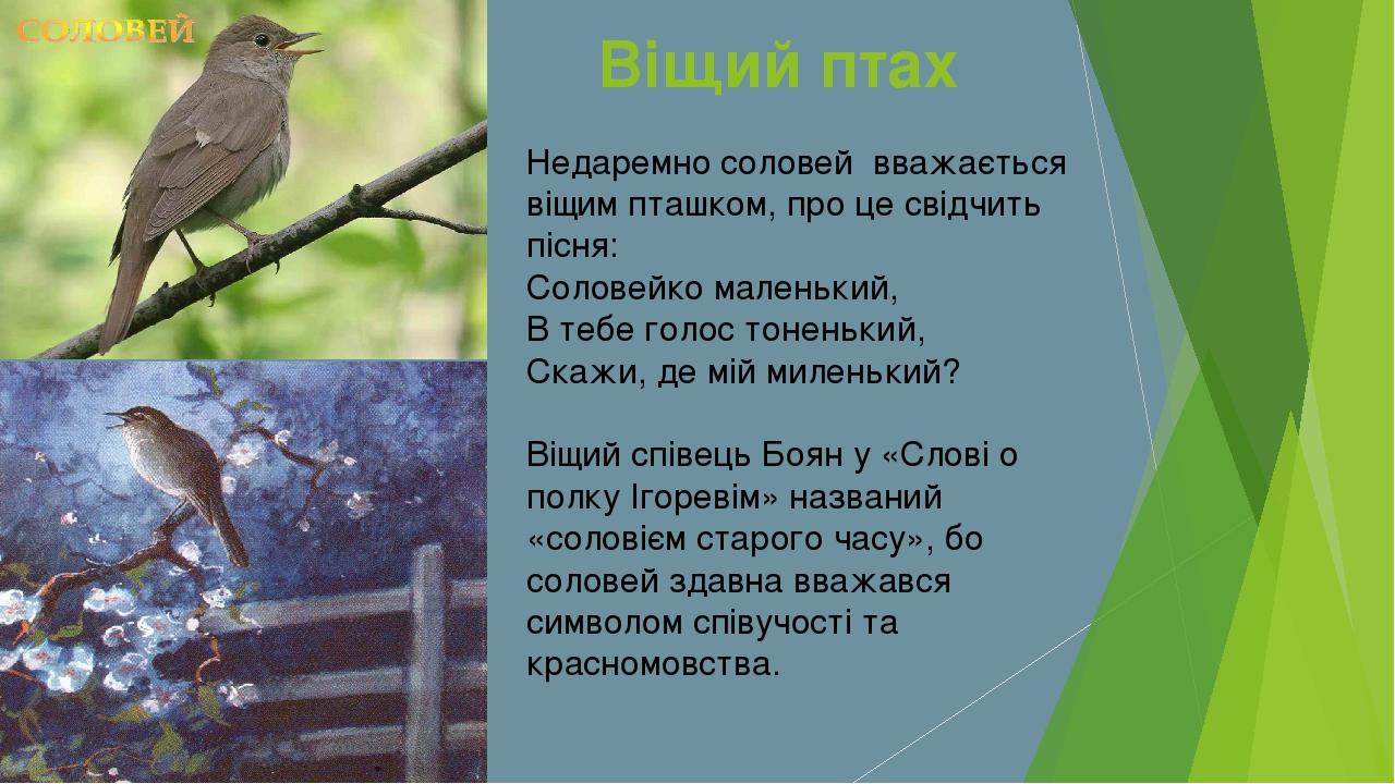 Недаремно соловей вважається віщим пташком, про це свідчить пісня: Соловейко...
