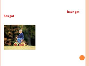 Look at the pictures and write sentences with have got or has got. Then write