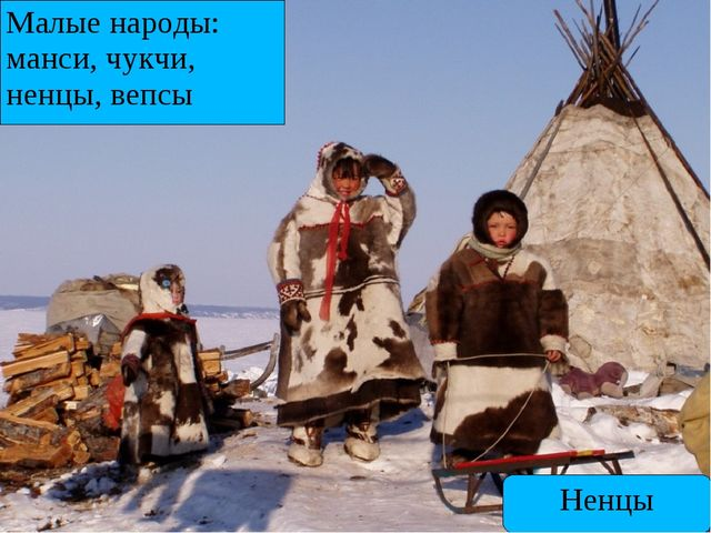 Малые народы: манси, чукчи, ненцы, вепсы Ненцы