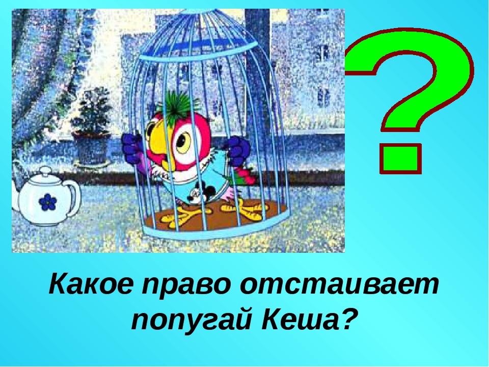 Какое право отстаивает попугай Кеша?