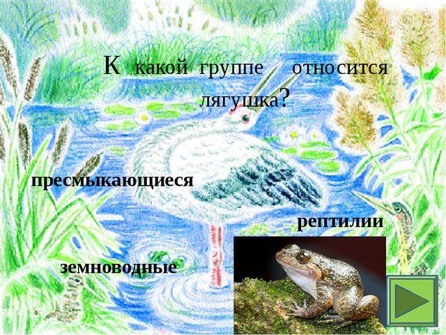 К какой группе относится лягушка? пресмыкающиеся рептилии земноводные