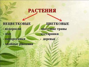 РАСТЕНИЯ НЕЦВЕТКОВЫЕ ЦВЕТКОВЫЕ - водоросли - цветущие травы - мхи - кустарни
