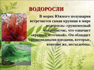 ВОДОРОСЛИ В морях Южного полушария встречается самая крупная в мире водоросль