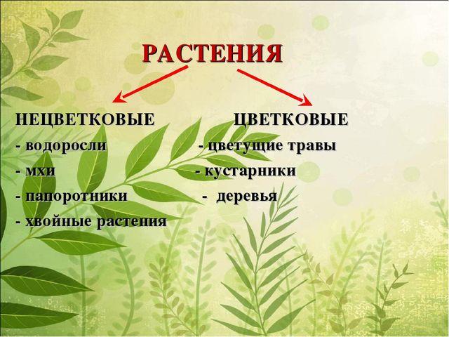 РАСТЕНИЯ НЕЦВЕТКОВЫЕ ЦВЕТКОВЫЕ - водоросли - цветущие травы - мхи - кустарни...