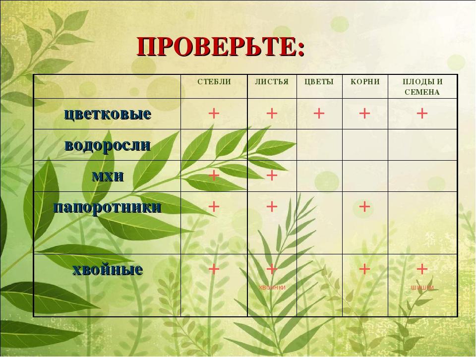 ПРОВЕРЬТЕ: СТЕБЛИЛИСТЬЯЦВЕТЫКОРНИПЛОДЫ И СЕМЕНА цветковые+++++ водо...