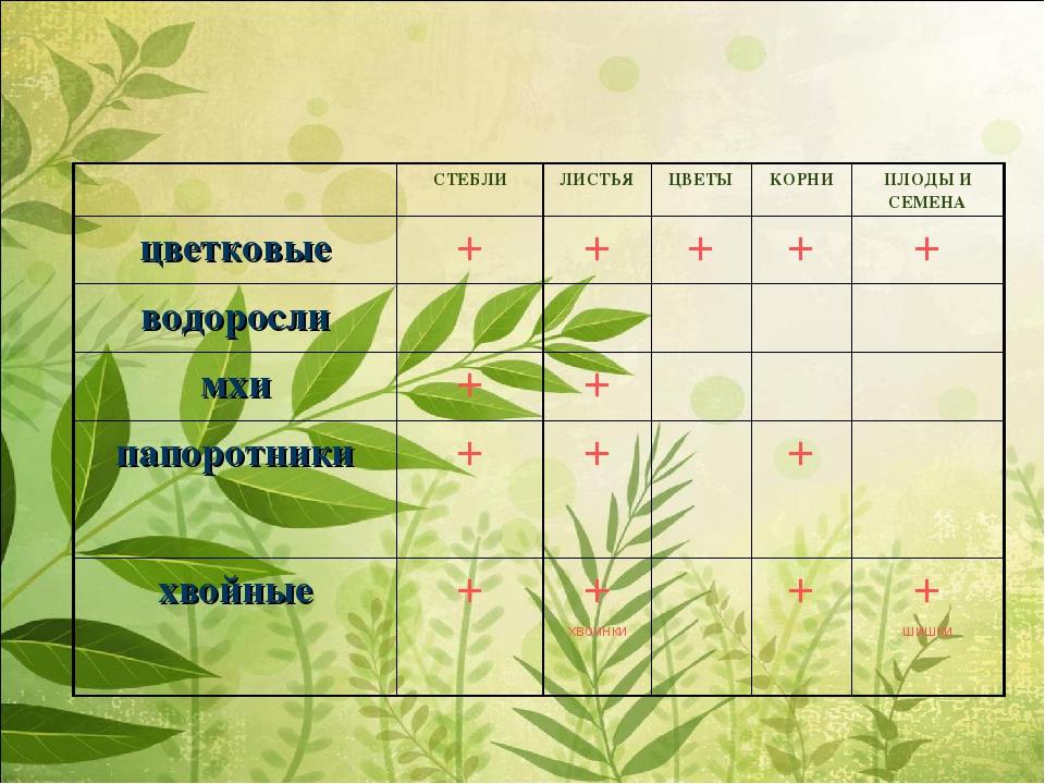 СТЕБЛИЛИСТЬЯЦВЕТЫКОРНИПЛОДЫ И СЕМЕНА цветковые+++++ водоросли...