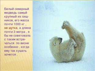 Белый северный медведь самый крупный из хищ- ников, его масса почти 1000 кг ,