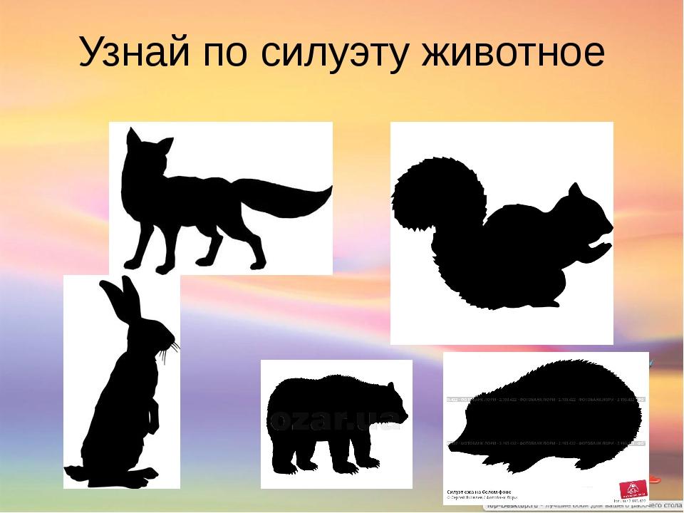 Узнай по силуэту животное