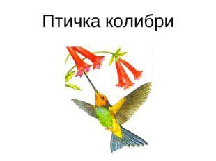Птичка колибри