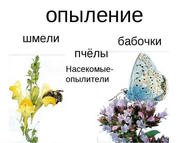 опыление шмели бабочки пчёлы Насекомые-опылители