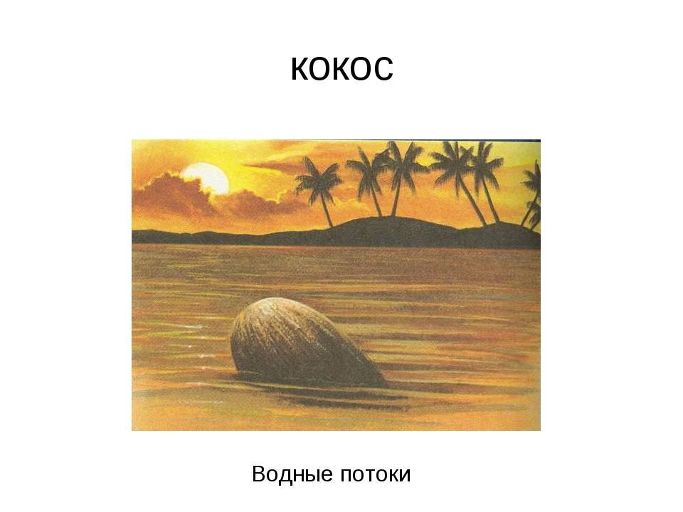 кокос Водные потоки