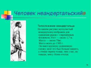 Человек неандертальский® * Телосложение неандертальца На нашем рисунке мускул