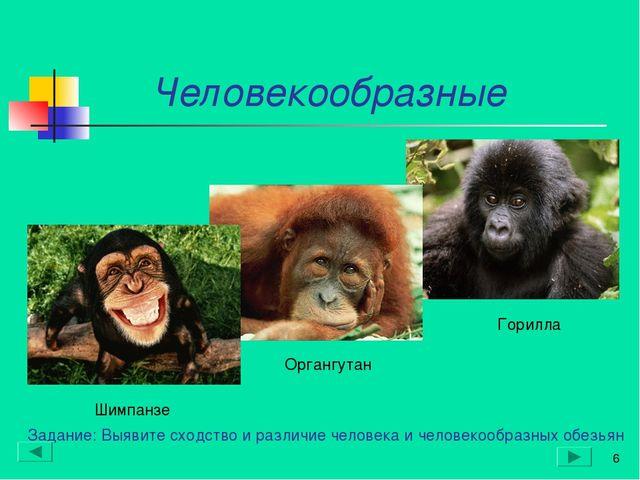 Человекообразные * Органгутан Шимпанзе Горилла Задание: Выявите сходство и р...