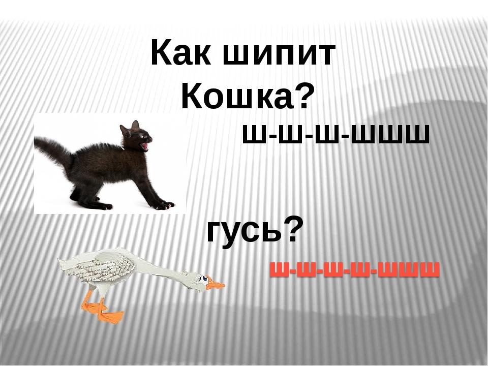 Как шипит Кошка? Ш-Ш-Ш-ШШШ гусь?