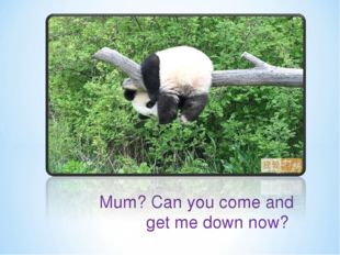 Mum? Can you come and get me down now?